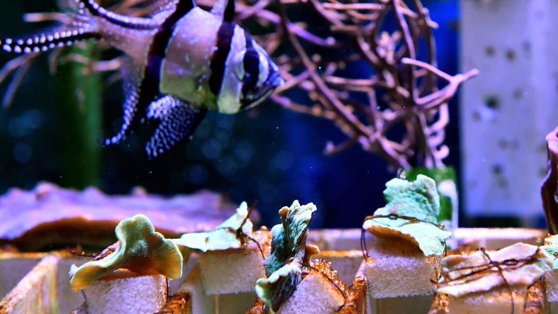 A Limoges, de la céramique pour sauver les récifs coralliens