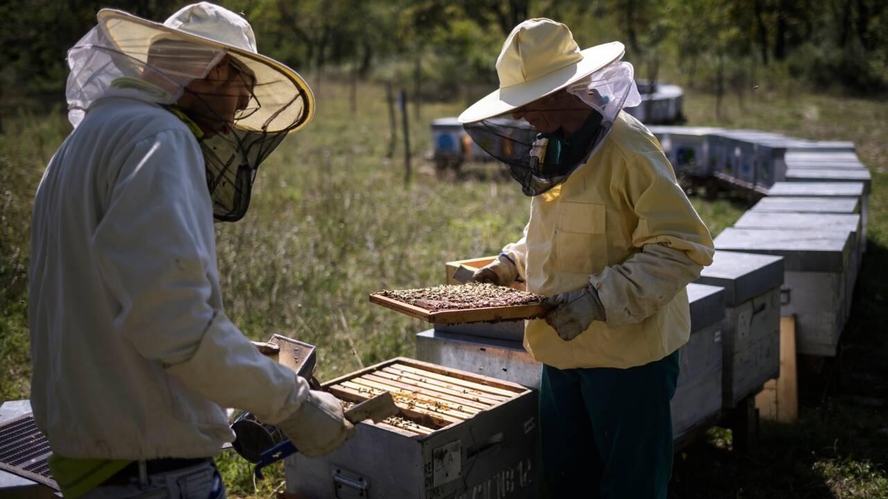 Désolation et inquiétude chez les apiculteurs italiens