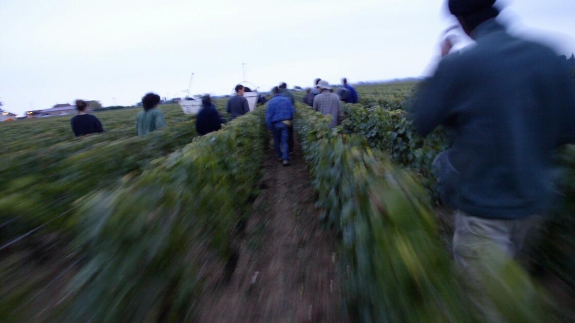 """Pesticides: les viticulteurs bourguignons """"très inquiets"""" du projet d'arrêté"""