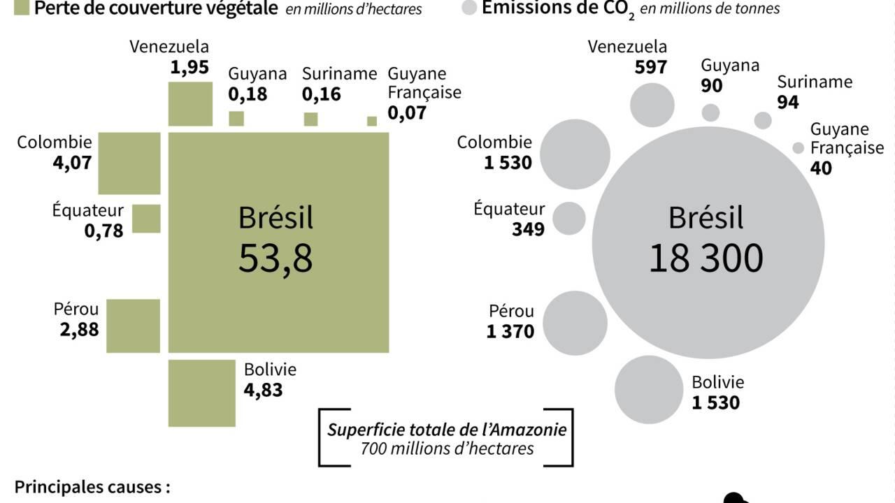 """""""La forêt debout"""", modèle économique pour sauver l'Amazonie"""