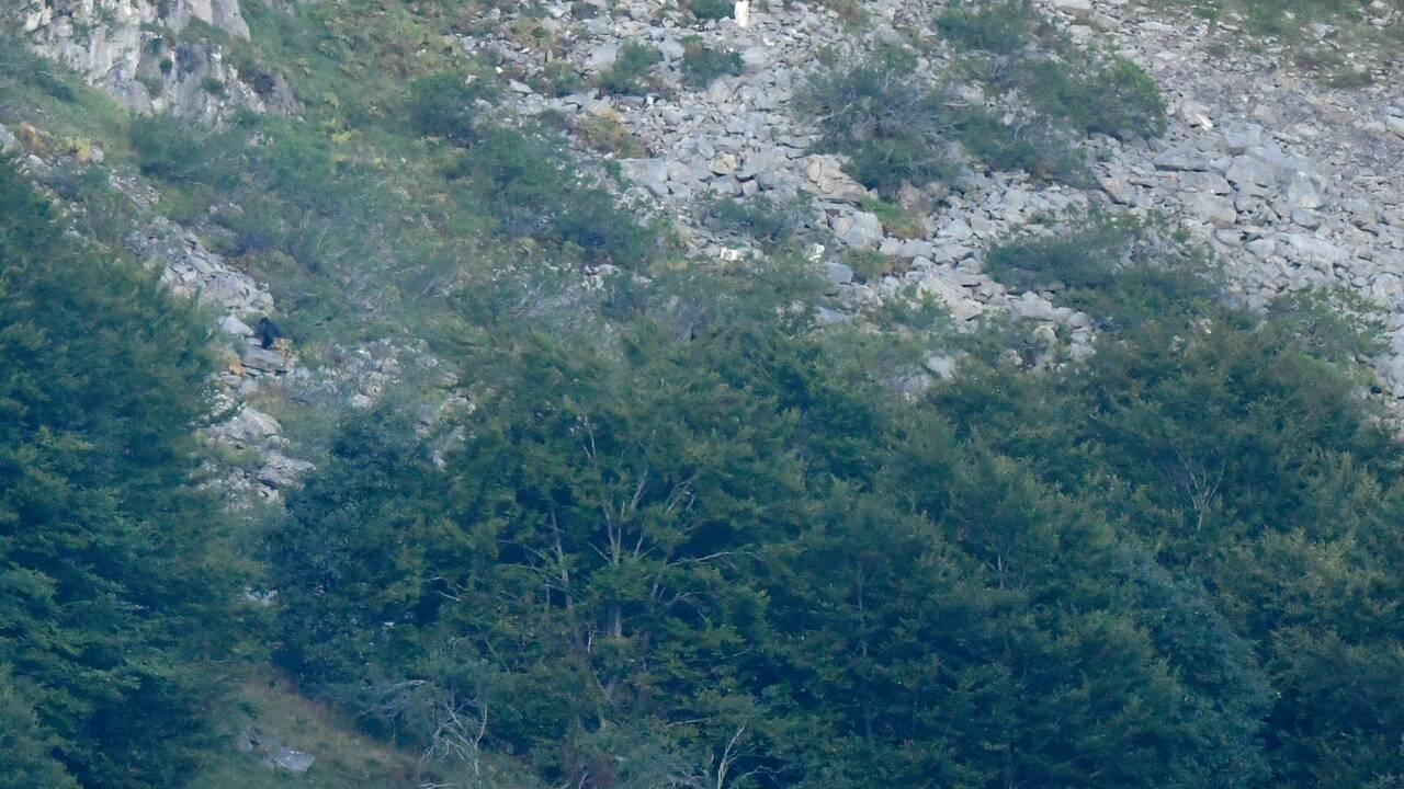 Heureux comme un ours dans les monts Cantabriques en Espagne
