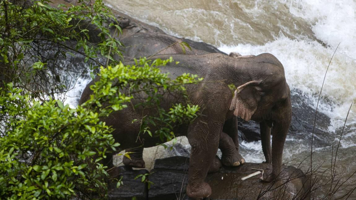 Thaïlande: six éléphants périssent en chutant dans une cascade