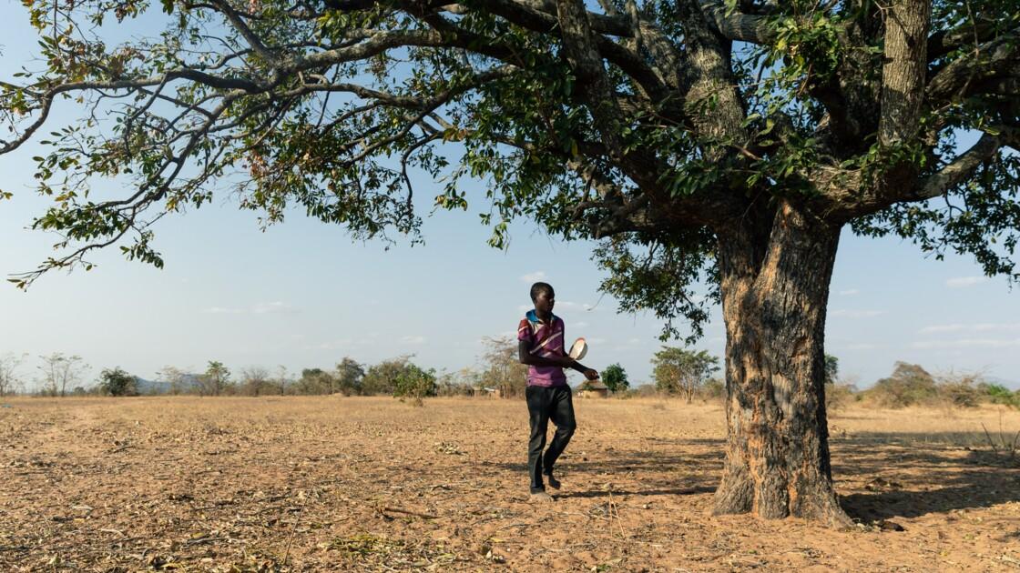 Au Zimbabwe, la sécheresse fait peser la menace de la famine