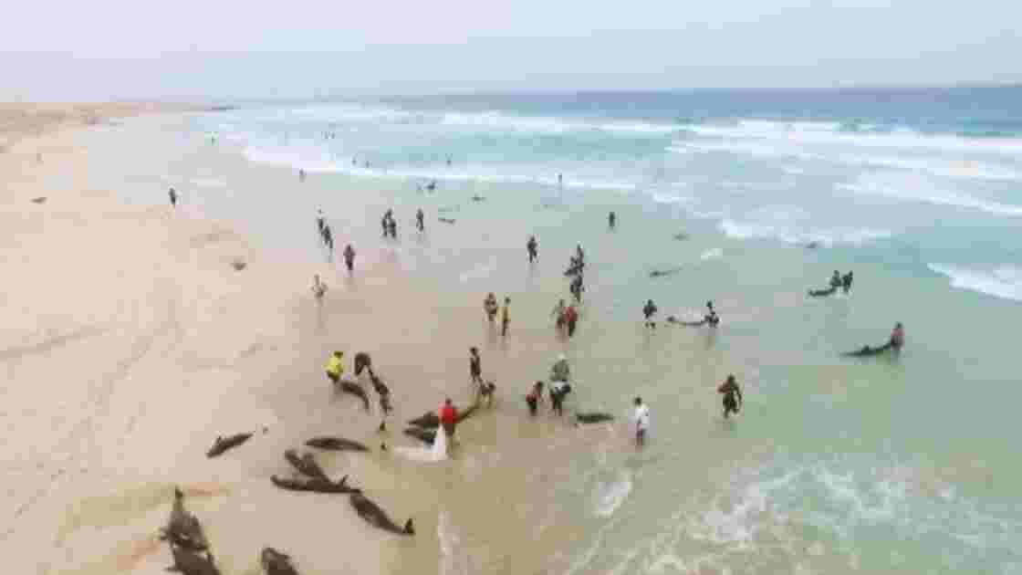 Cap-Vert: échouement massif et mystérieux de dauphins sur une plage