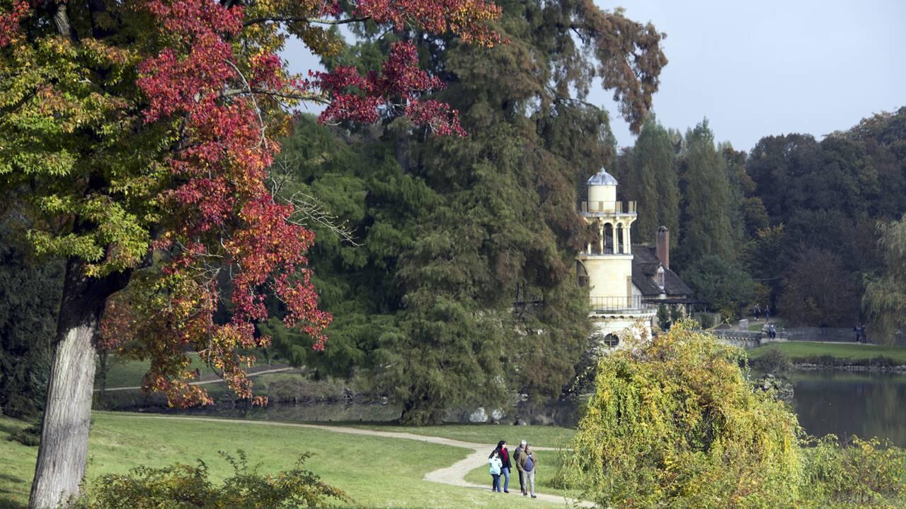 """Les """"arbres admirables"""" du château de Versailles à découvrir grâce à une nouvelle promenade"""