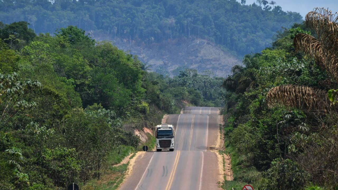 Sur la route à travers l'Amazonie, l'asphalte mange la forêt