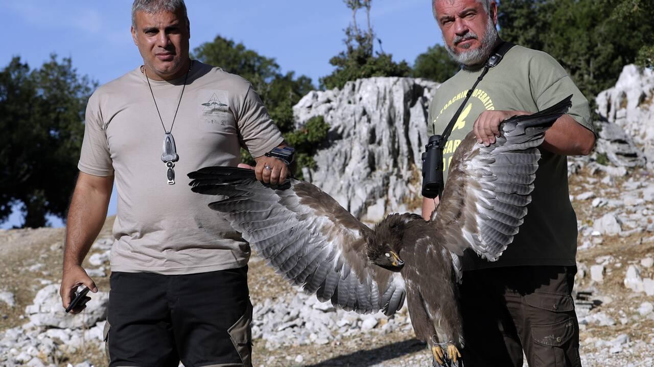 Liban: des ONG réclament une protection pour des oiseaux migrateurs menacés