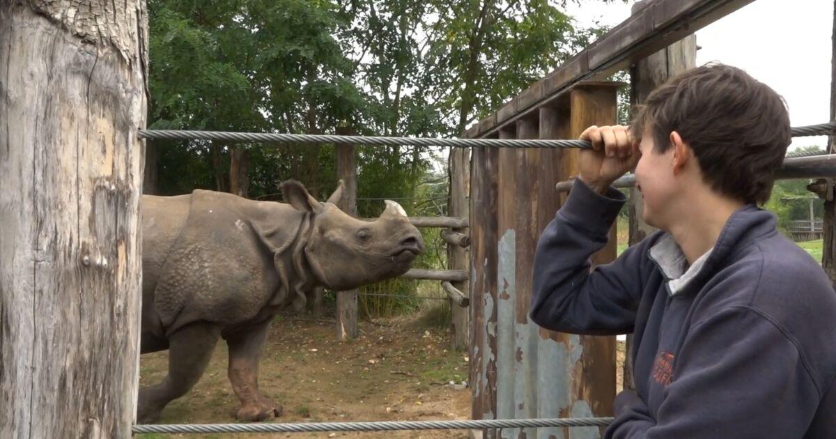 Espèces menacées : en immersion avec les rhinocéros du zoo de la Flèche