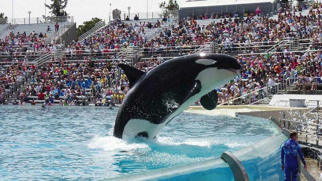 TripAdvisor et Airbnb s'engagent pour un tourisme animalier responsable
