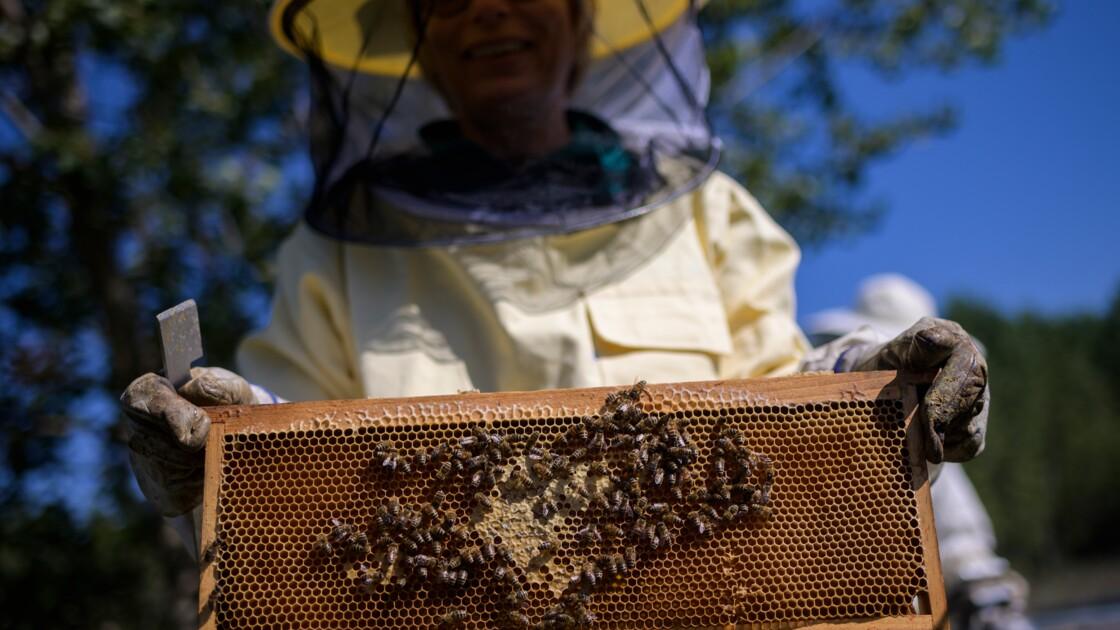 2019, année noire pour les apiculteurs européens