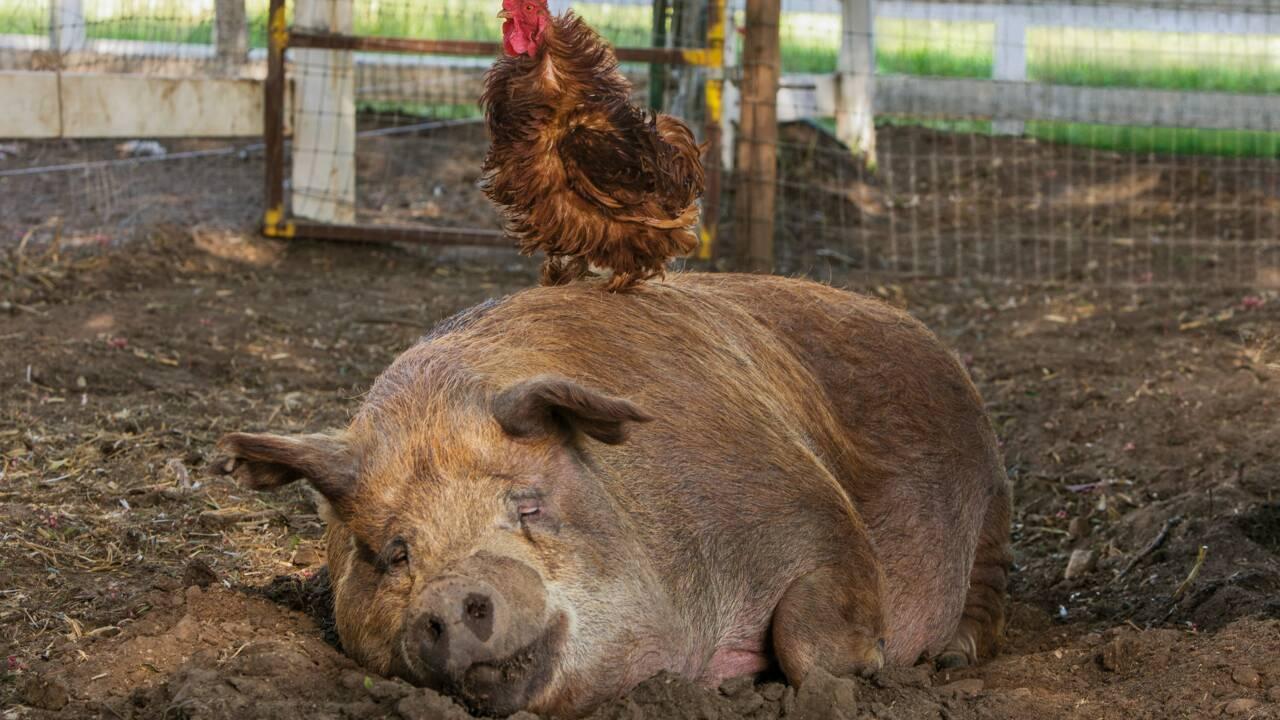 """""""Tout est possible"""" : le documentaire sur une ferme idéale en Californie qui donne de l'espoir"""