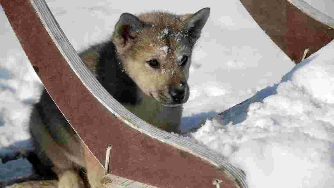 """Jørn Riel : """"Les Inuits ont le sixième sens que nous avons perdu"""""""