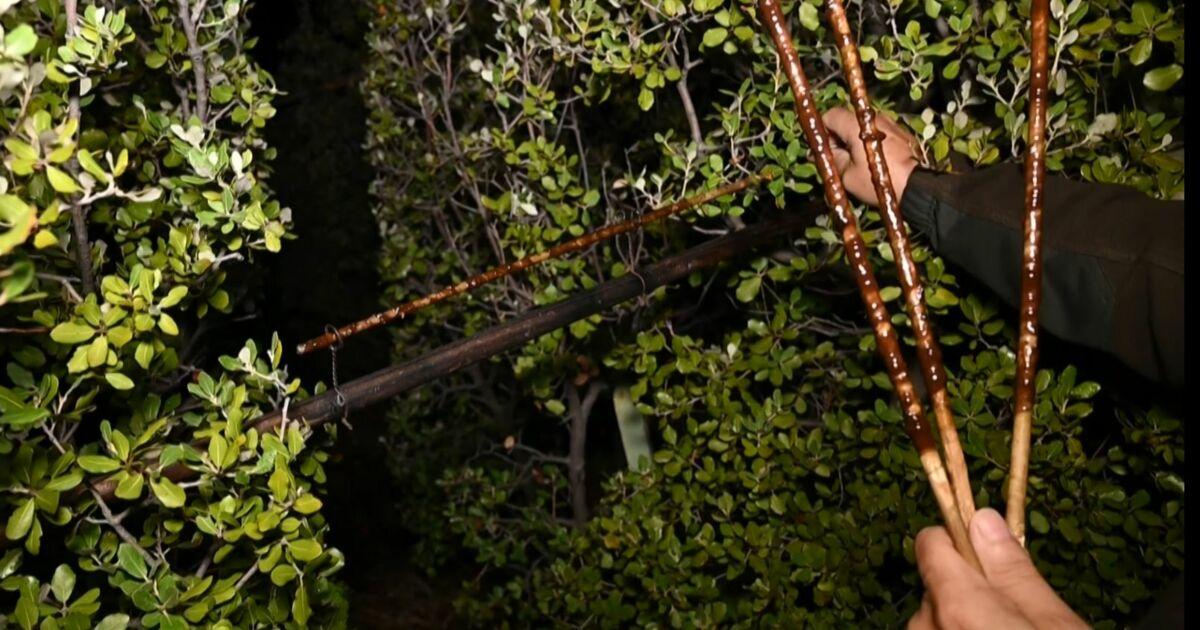 La chasse à la glu dans le viseur des défenseurs de la nature