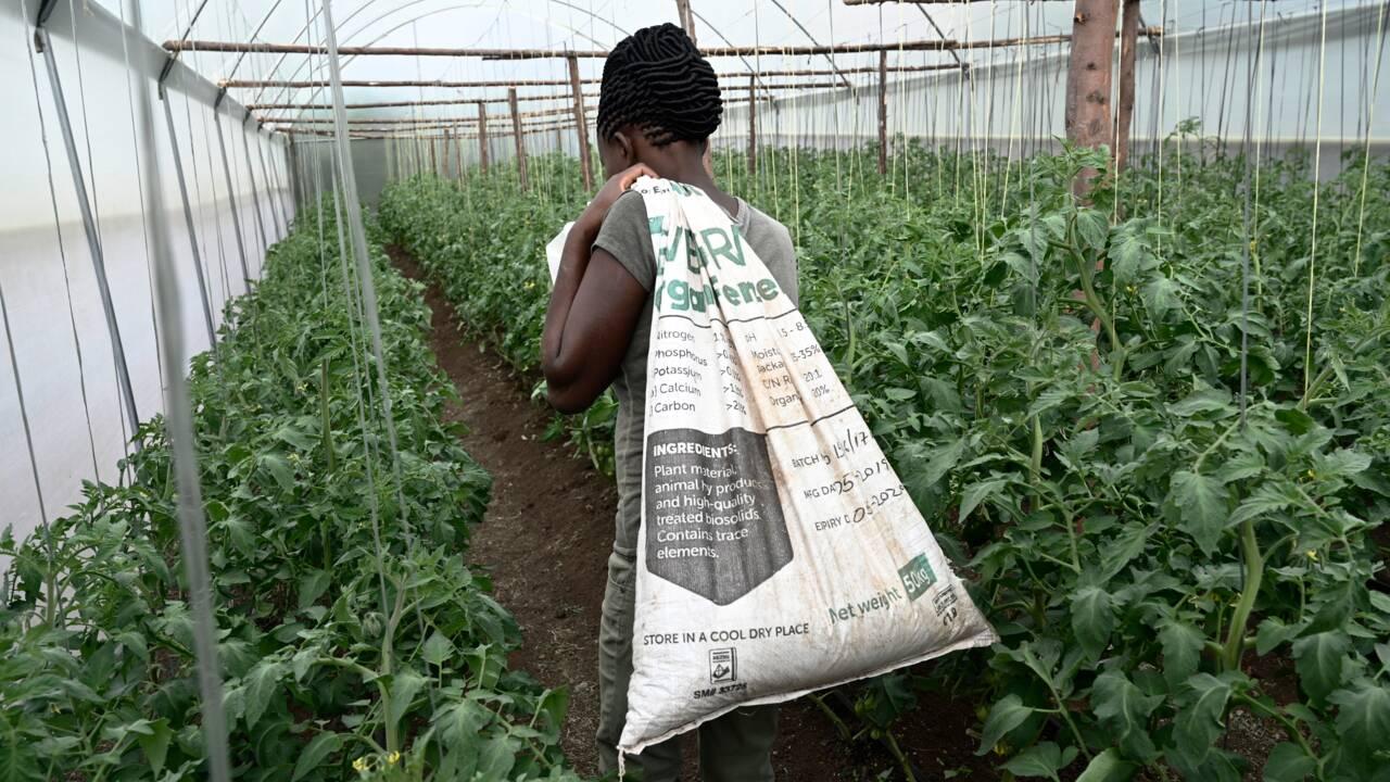 Kenya: à Nairobi, on recycle les excréments pour assainir les bidonvilles
