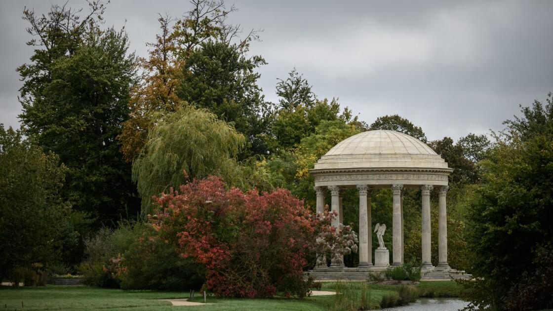 """Versailles célèbre ses """"arbres admirables"""", mémoire vivante de l'Histoire"""