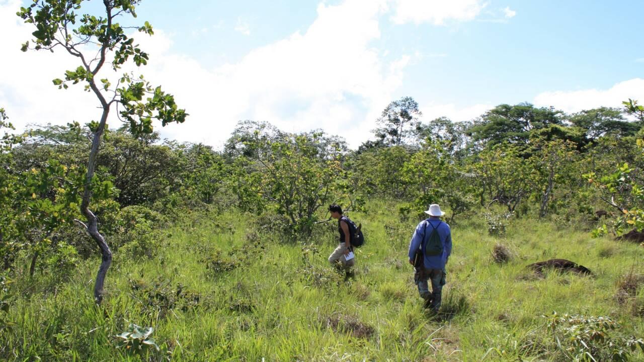 12 000 tonnes d'écorces d'oranges donnent naissance à une forêt au Costa Rica