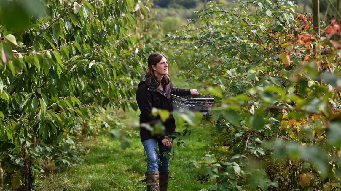 Dans une ferme bio du Sussex, l'ombre menaçante du Brexit