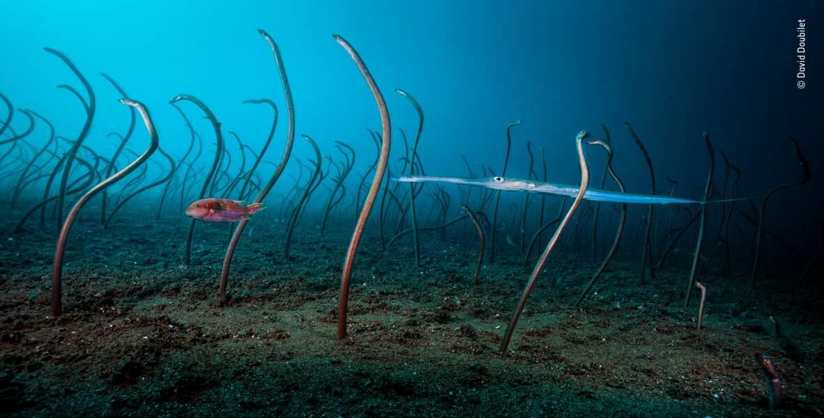 Le jardin des anguilles