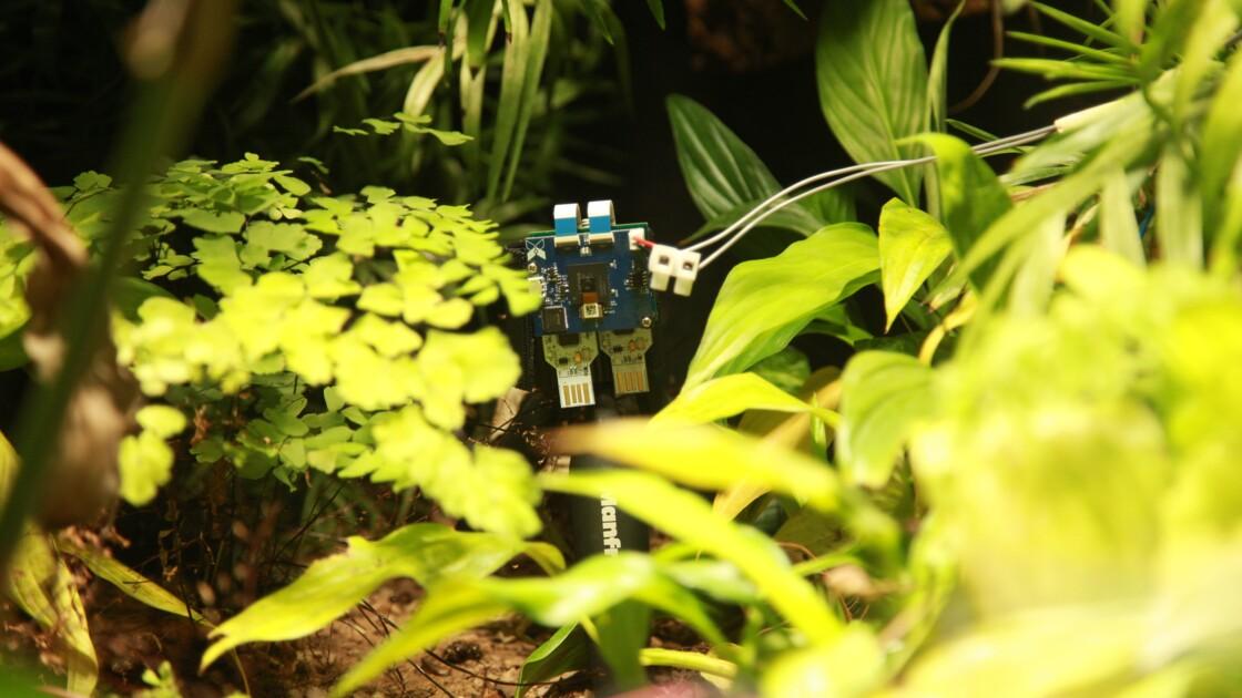 Une fougère est la première plante au monde à se prendre en selfie