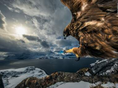 Les photos gagnantes du Wildlife Photographer of the Year 2019 annoncées