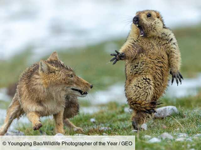 Wildlife Photographer of the Year : les plus belles photos animalières de l'année 2019 dévoilées