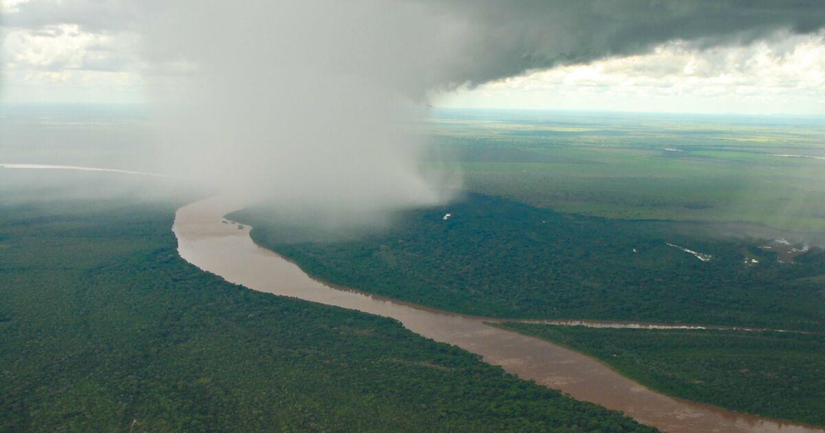 A la découverte des rivières volantes, ce fascinant phénomène qui flotte au-dessus de l'Amazonie
