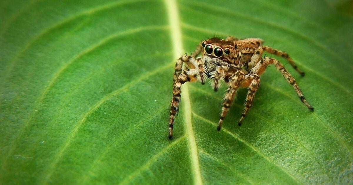 Les 5 infos insolites à savoir sur l'araignée