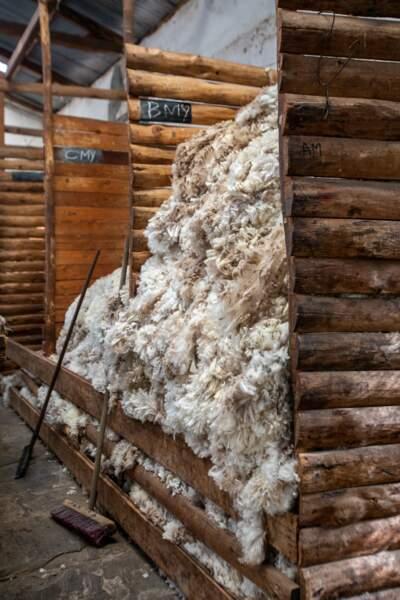 La meilleure laine du monde
