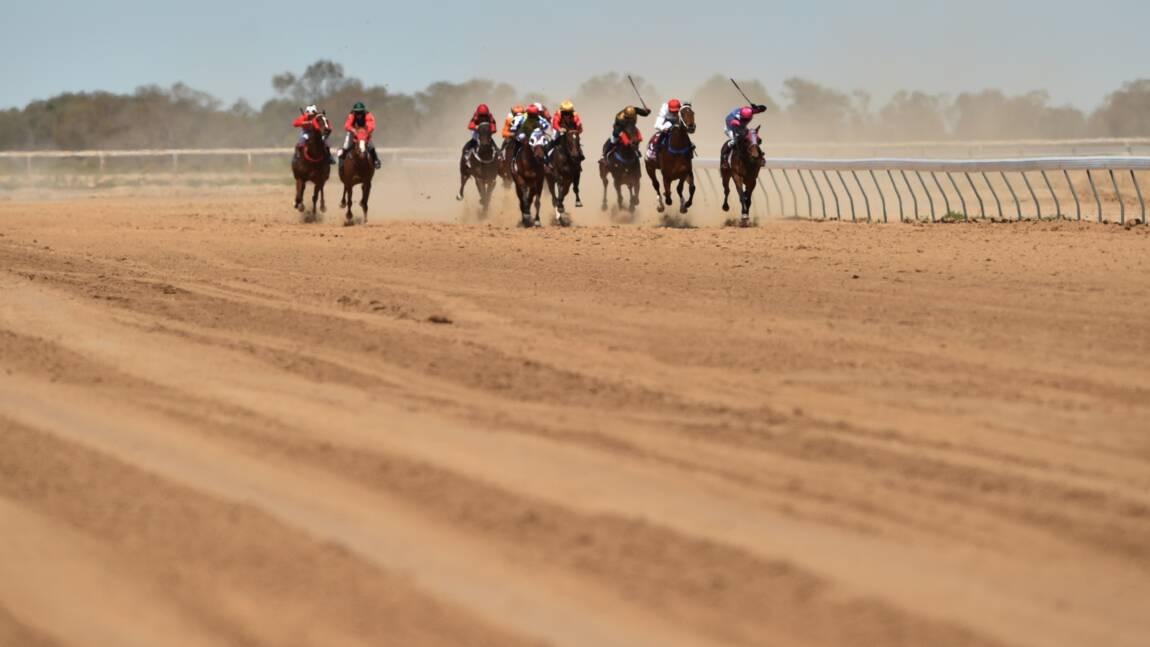 L'Australie choquée par un reportage sur l'abattage massif de chevaux de course