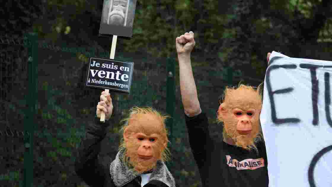 Strasbourg: manifestation pour la fermeture d'un centre de primatologie