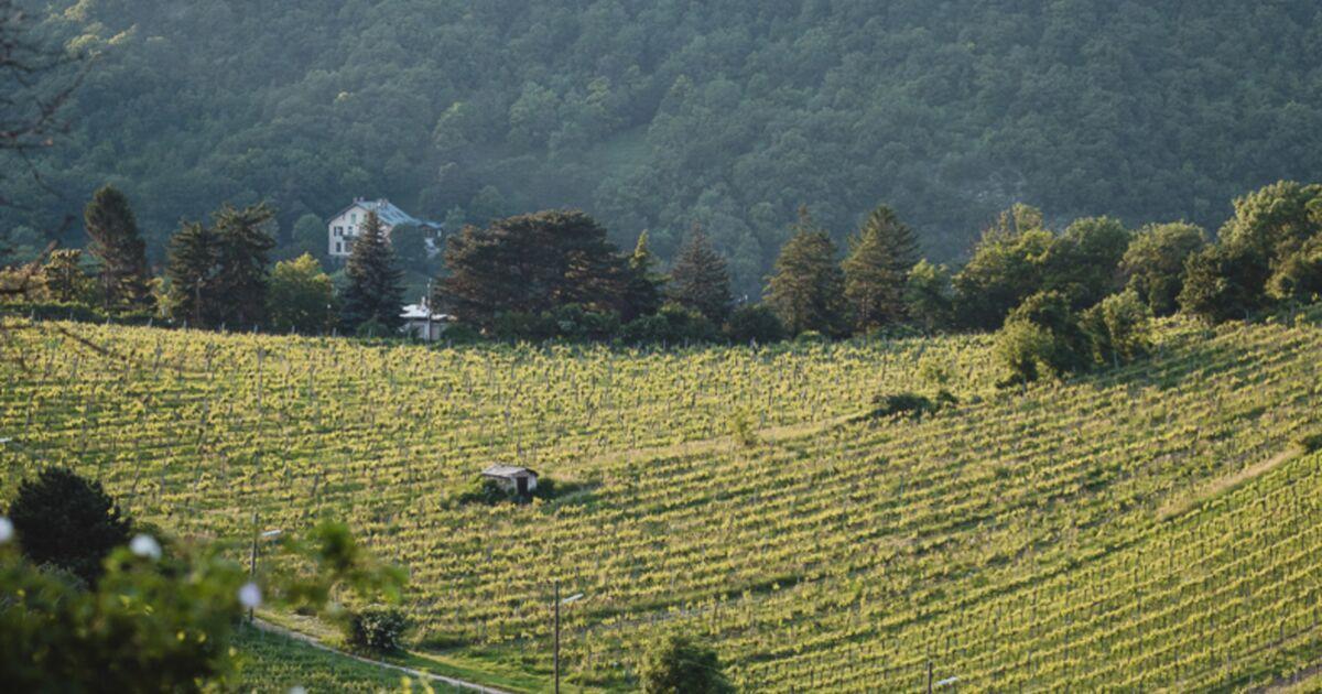Bienvenue dans la ville qui compte le plus de vignobles au monde