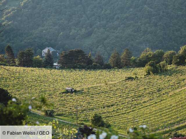 Bienvenue à Vienne, la ville qui compte le plus de vignobles au monde