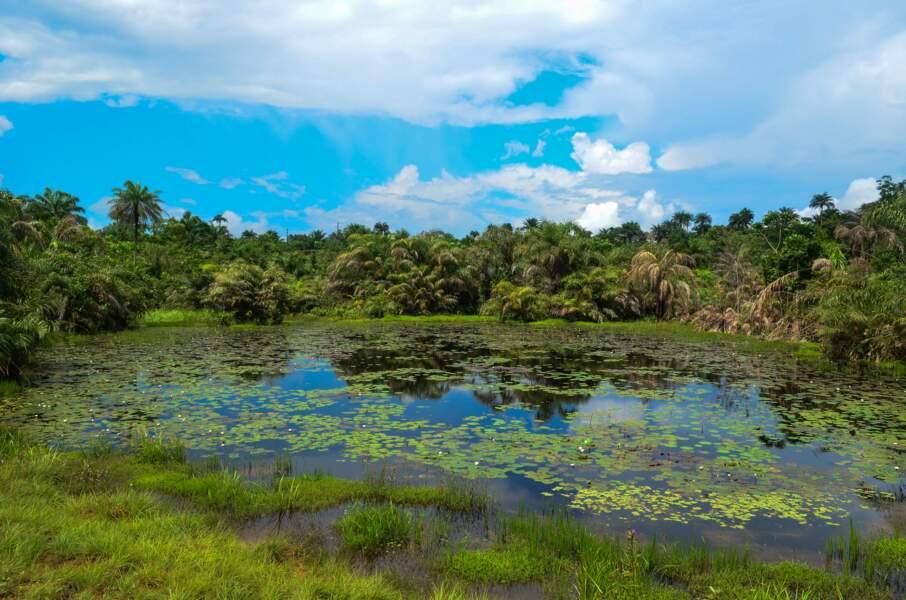 La nature au Liberia