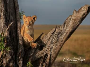 Les plus belles photos de safari de la Communauté GEO