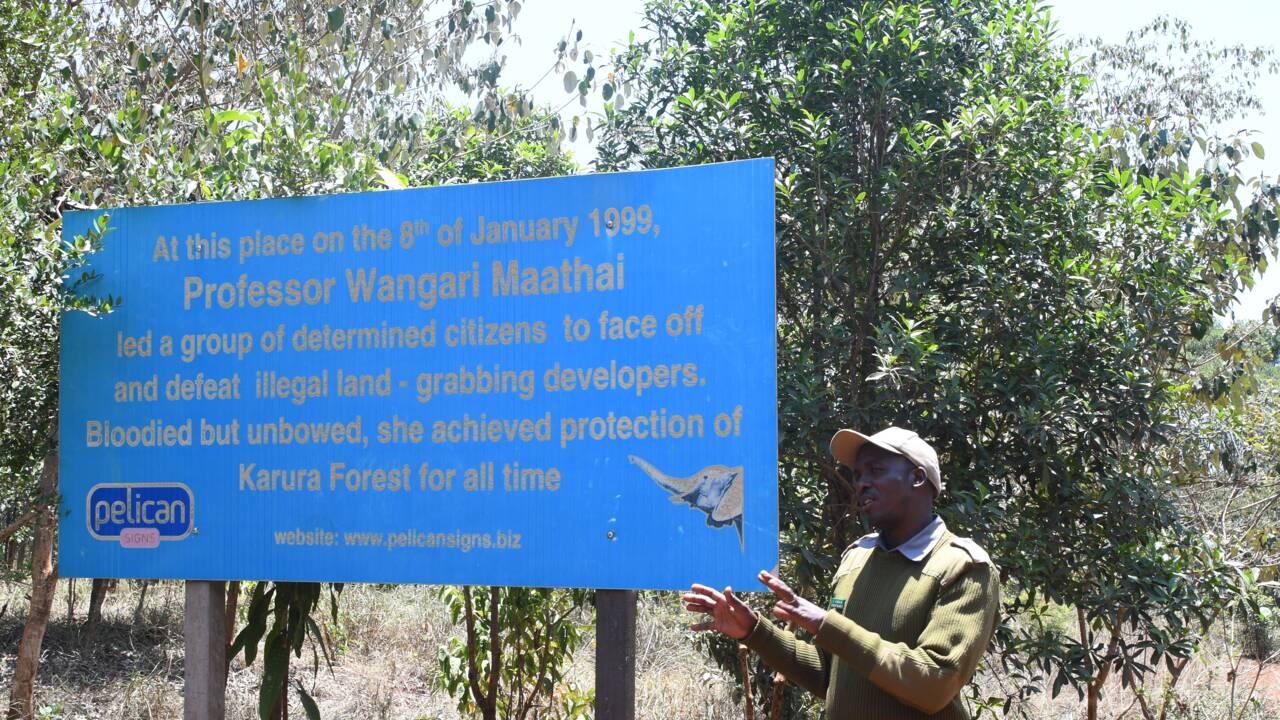 Au Kenya, une forêt renaît au coeur de la capitale Nairobi