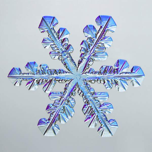 5. Un flocon de neige, grossi 4 fois
