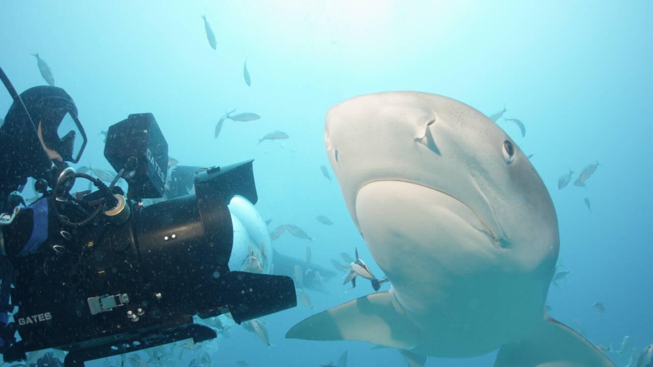 Rob Stewart, l'amoureux des requins qui a consacré sa vie à les protéger