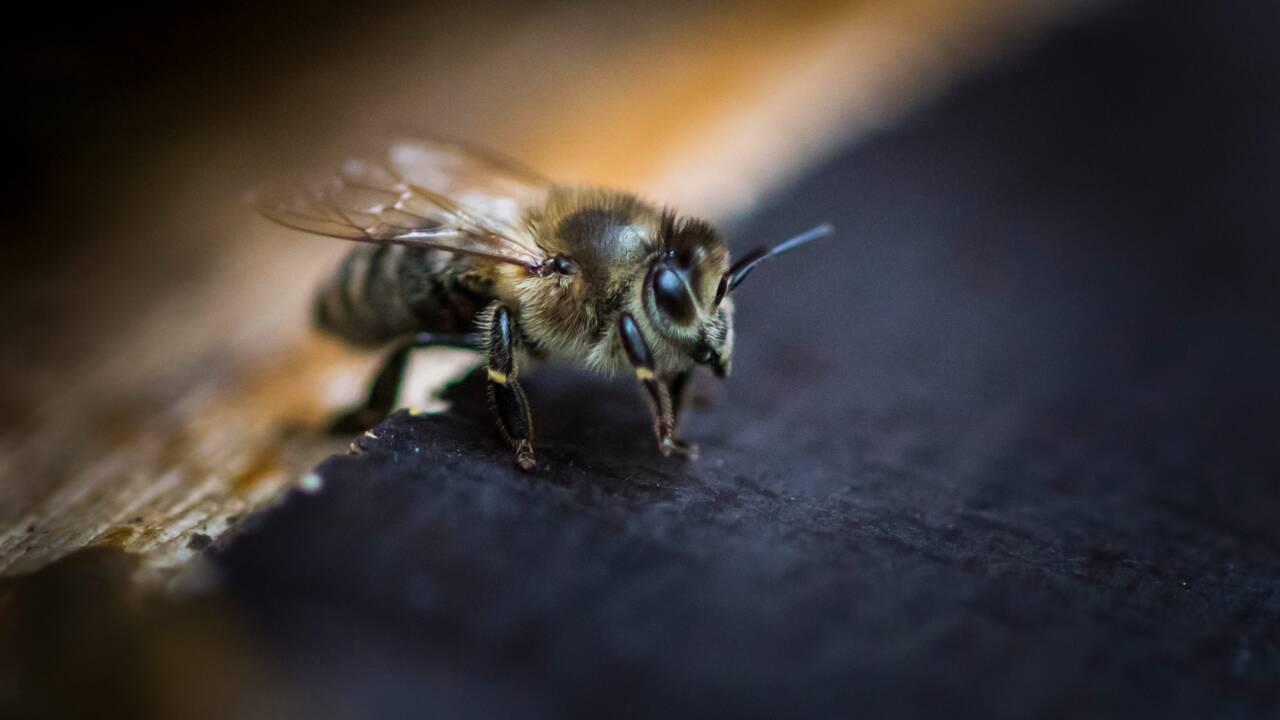 Disparition des abeilles : les pesticides néonicotinoïdes en 10 questions à Stéphane Foucart