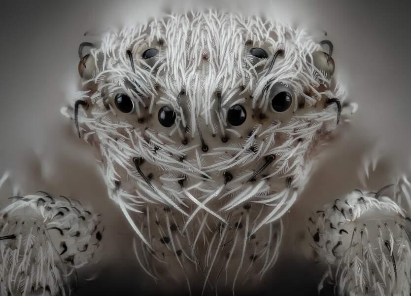 6. Une petite araignée blanche, grossie 20 fois