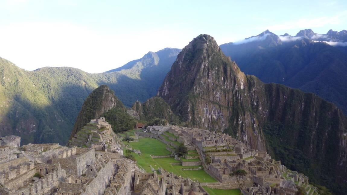 Au Pérou, des archéologues redécouvrent un arbre utilisé par les Incas