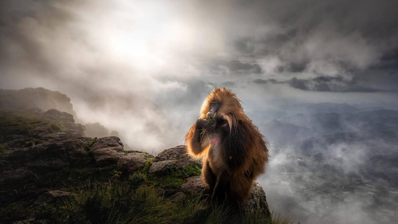 Ces étonnantes photos de vie sauvage récompensées en 2019 au European wildlife photographer of the year