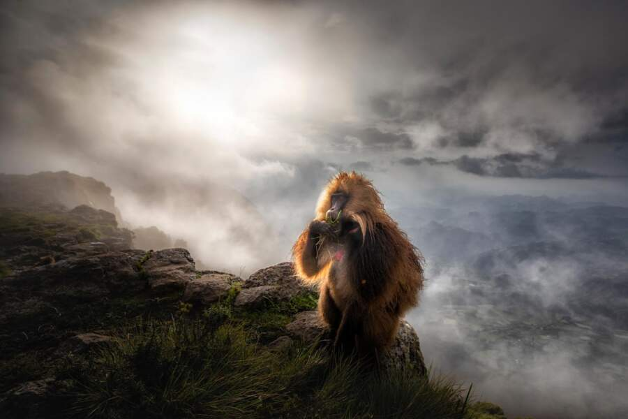 En Ethiopie, un primate gélada après l'orage