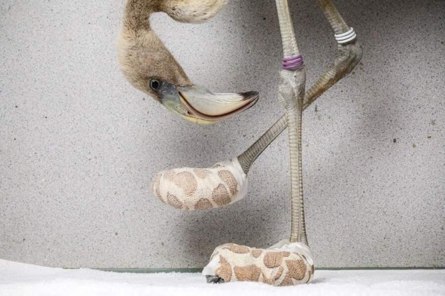 Les chaussettes de l'archiflamant