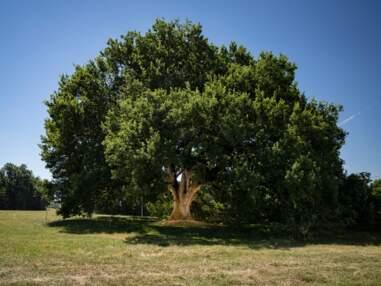 Votez pour les plus beaux arbres français de l'année 2019