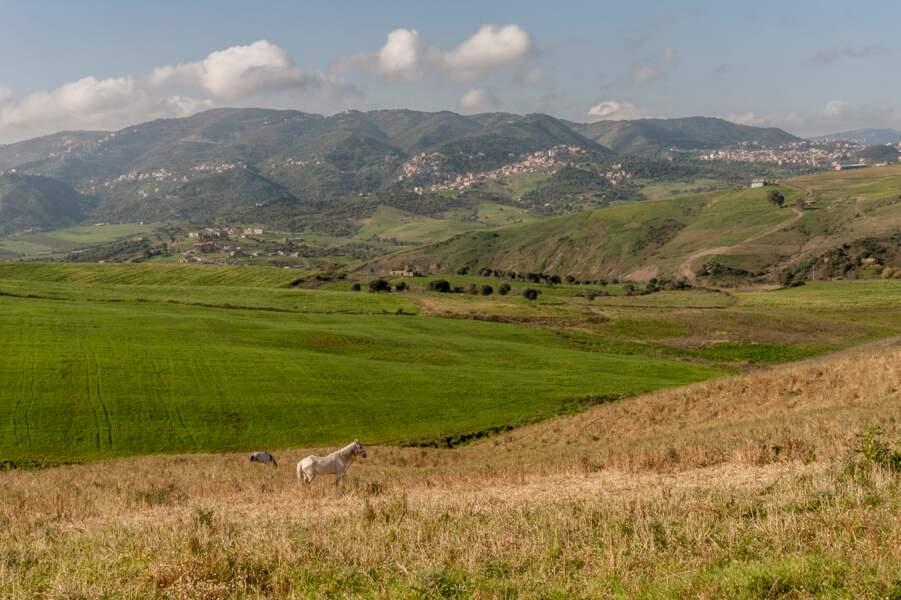 A travers la Grande Kabylie