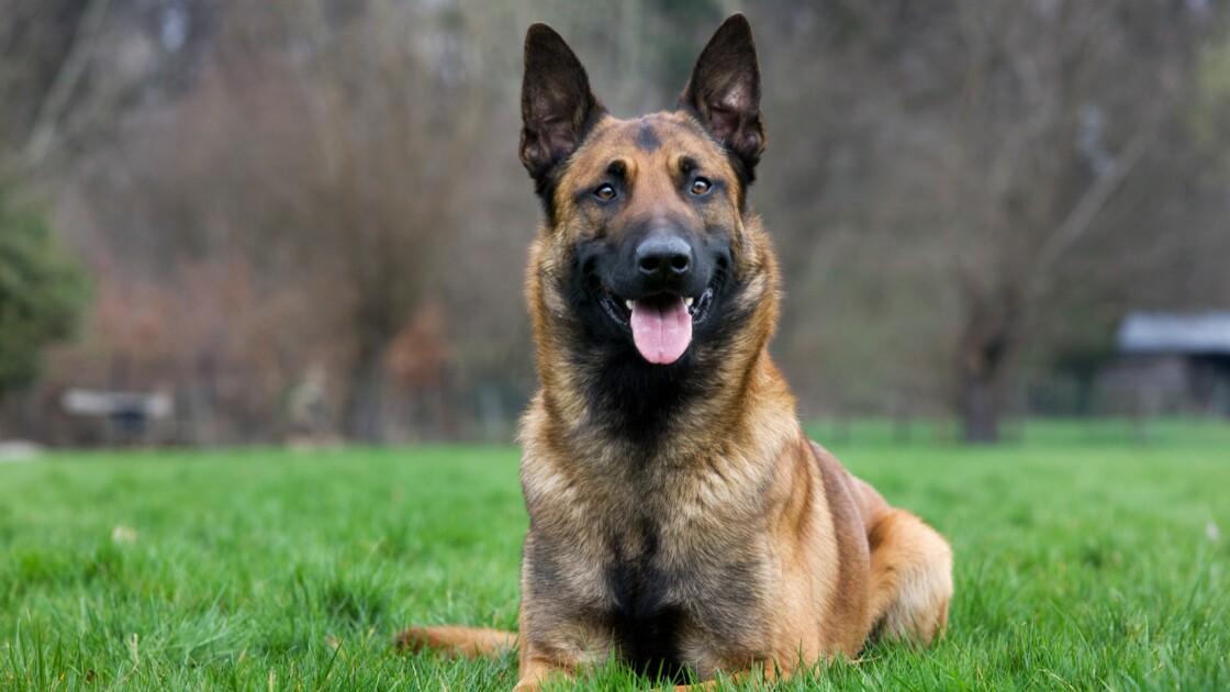 Des chiens renifleurs découvrent des sépultures vieilles de 3000 ans en Croatie