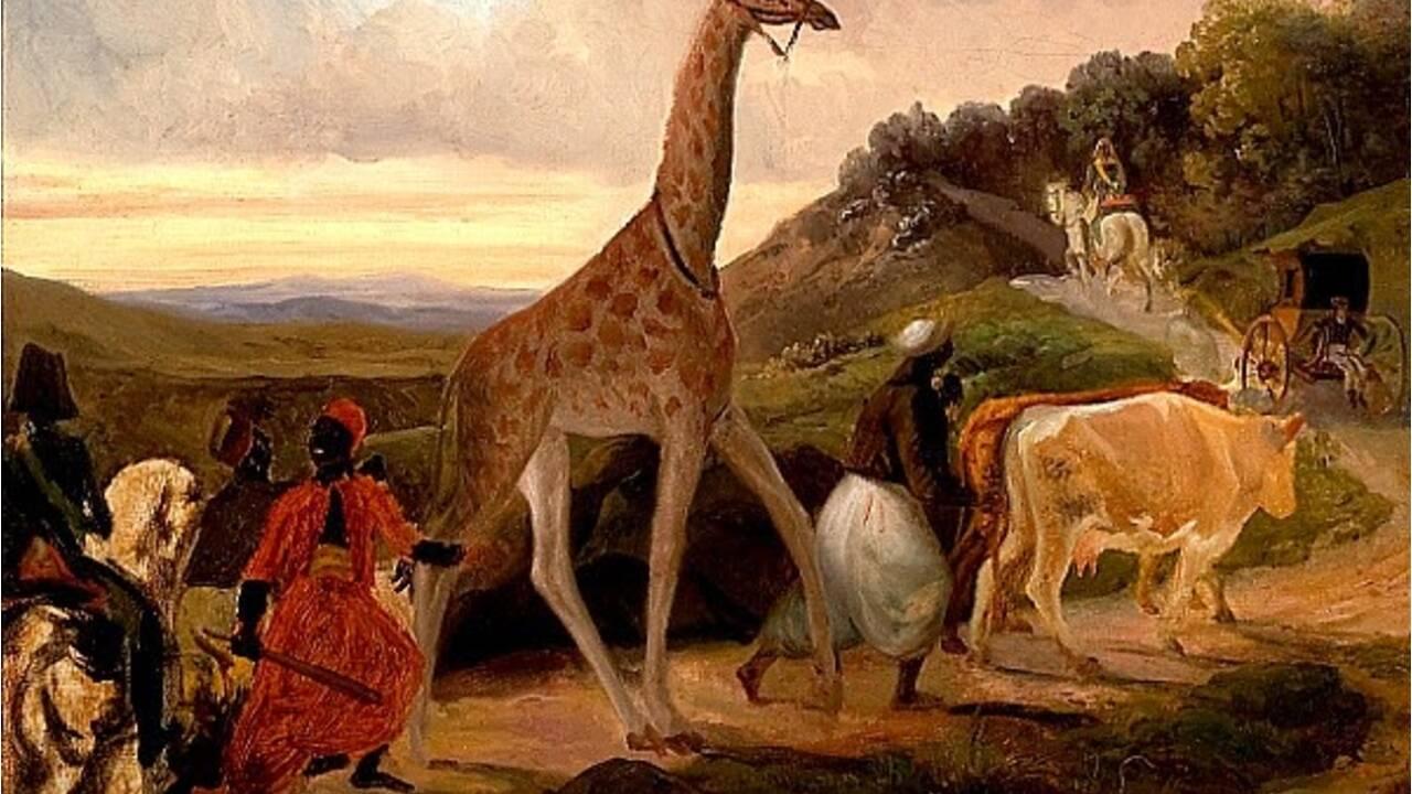 Cinq animaux qui ont marqué l'histoire