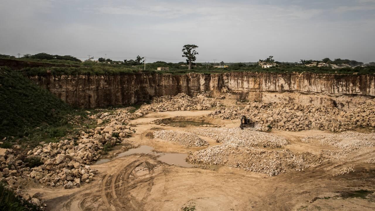 Au Sénégal, les baobabs ploient sous la pression des cimentiers
