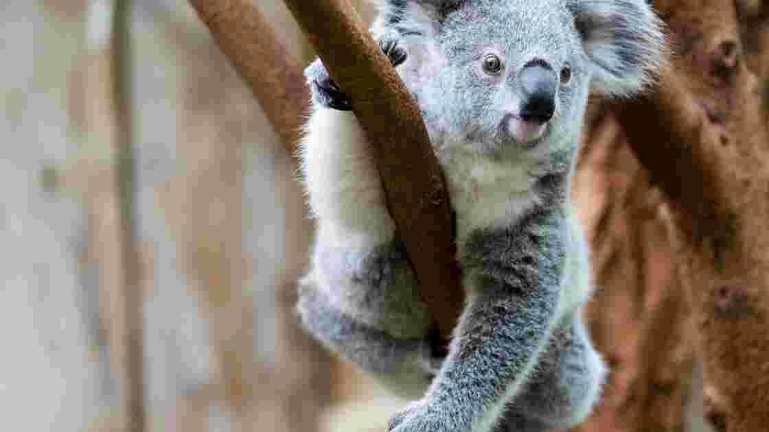 fit rencontres sites Australie