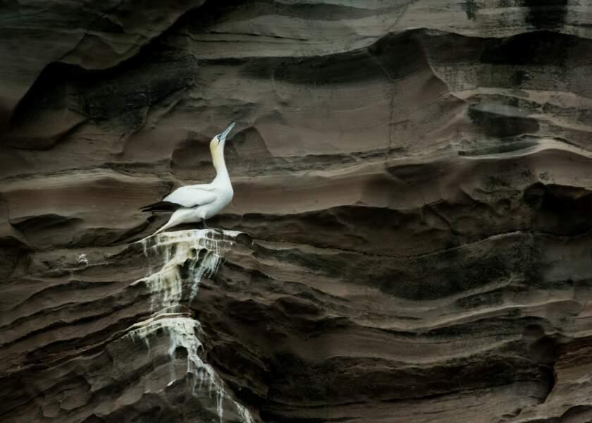 L'art de bénéficier de la géologie, île de Noss (Écosse)
